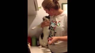 Min syster är älskad av sin katt-3