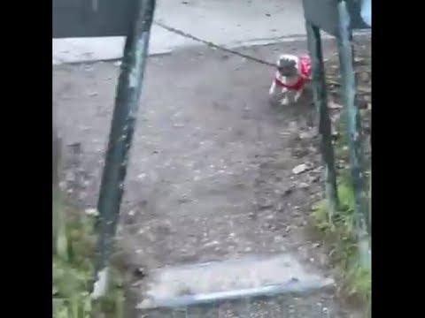 Dog With Massive Stick Fail 😂😂