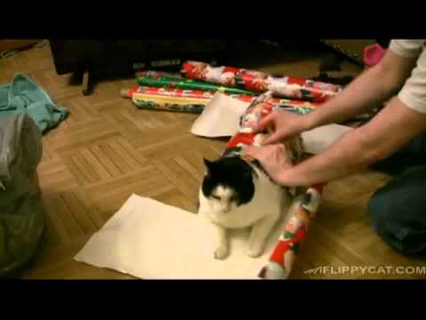Some Guy Named Tias - Not sure why....but here's how to Christmas Wrap a Cat