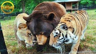 10 สัตว์ที่รับเลี้ยงลูกของสัตว์ตัวอื่น (รักข้ามสายพันธุ์!)