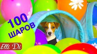 100 ВОЗДУШНЫХ ШАРОВ ДЛЯ СОБАКИ ДЖИНА ПРАЗДНИК | Elli Di Pets