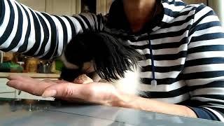 Собаки царских кровей едят только со стола. Ну или с рук