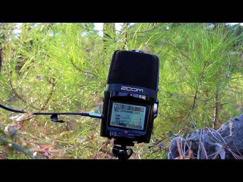 Zoom H2n Recorder Test