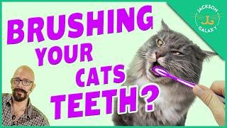 Should I Brush My Cat's Teeth?