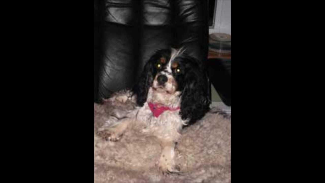 Dog Breeder 877 363 2121 Quebec Canada