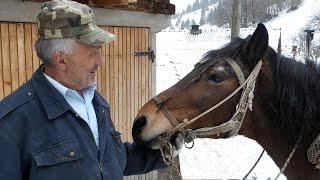 Samarice nestaju, ljubav prema konjima ostaje