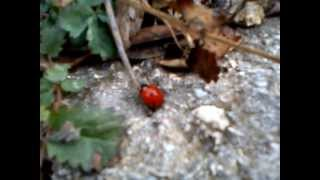 Ladybug is taking a walk