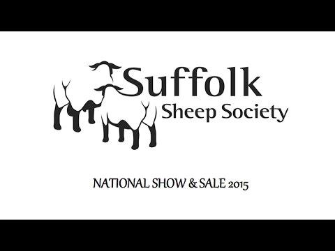 Top 15 Ram Lamb Prices Suffolk Sheep Society Sale at Shrewsbury July 25th 2015