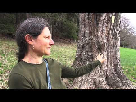 Liz Alpert Fay artist profile
