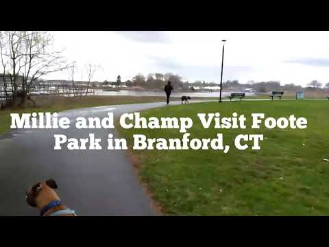 Millie and Champ Visit Foote Park in Branford, CT