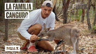 Wild Frank se encuentra con una familia de canguros y se queda sin almuerzo