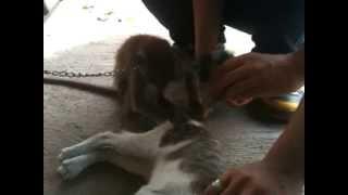 Kucing Vs Monyet
