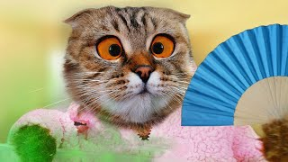 Are You My magic cat