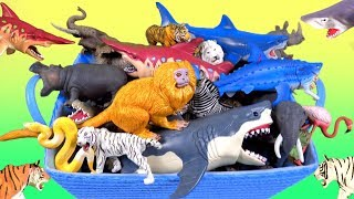 44 Wild Zoo Animals Lions Tigers Sharks Big Cats - Learn About Zoo Animals