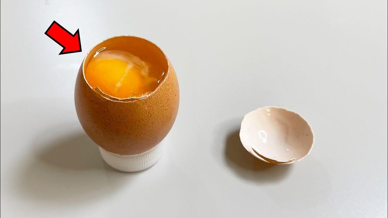 당신이 달걀에서 보지 못한 것들 - 달걀 해부