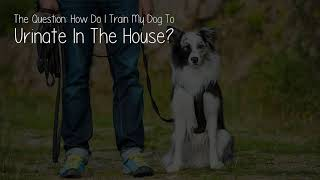How Do I Train My Dog To Urinate In The House?