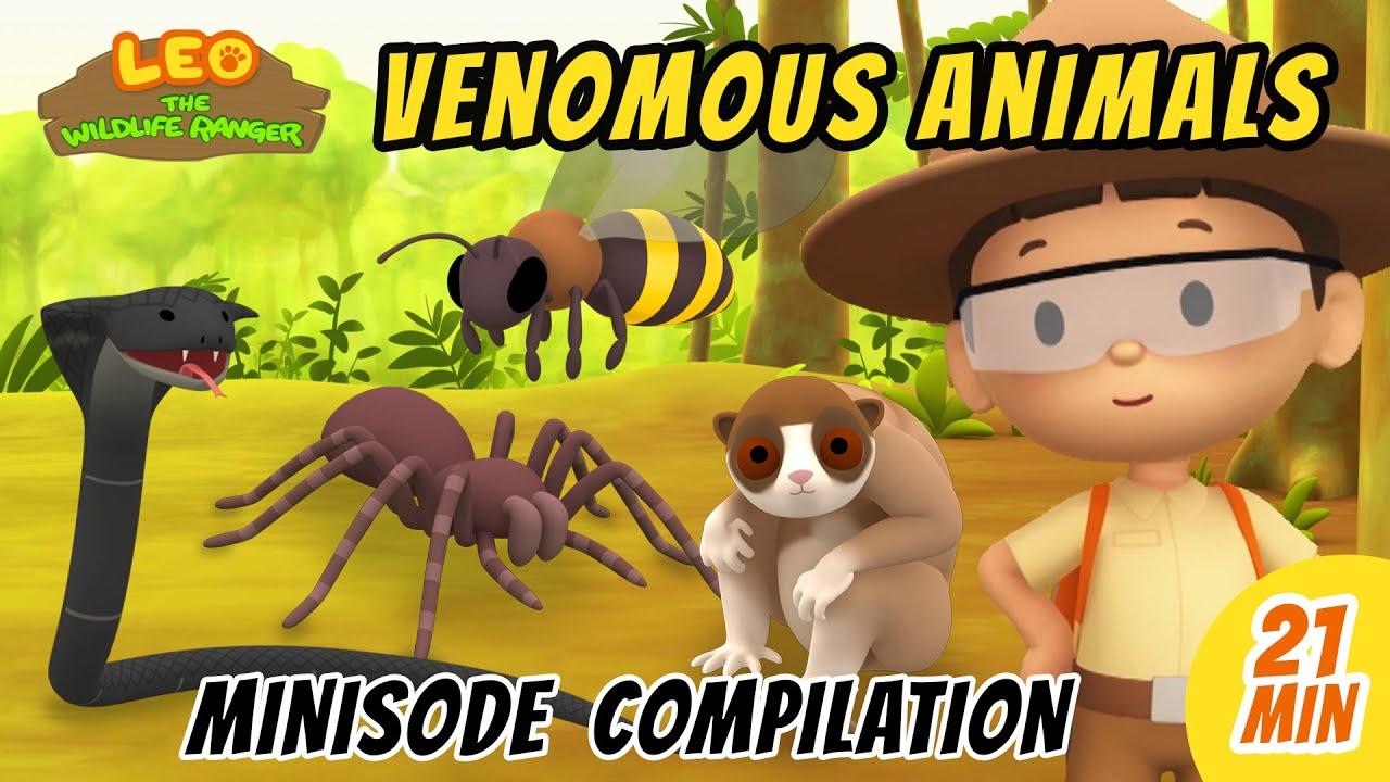 Venomous Animals Minisode Compilation - Leo the Wildlife Ranger   Animation   For Kids