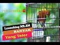 Heboh Banyak Yang  Teler  Di Launching Mr Bm Cawang Kencana  Mp3 - Mp4 Download