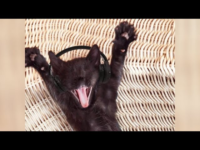 Are CATS funnier than DOGS? Enjoy watching and LAUGH with us!