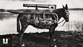 5 Unusual Ways Animals Were Weaponized In WW2