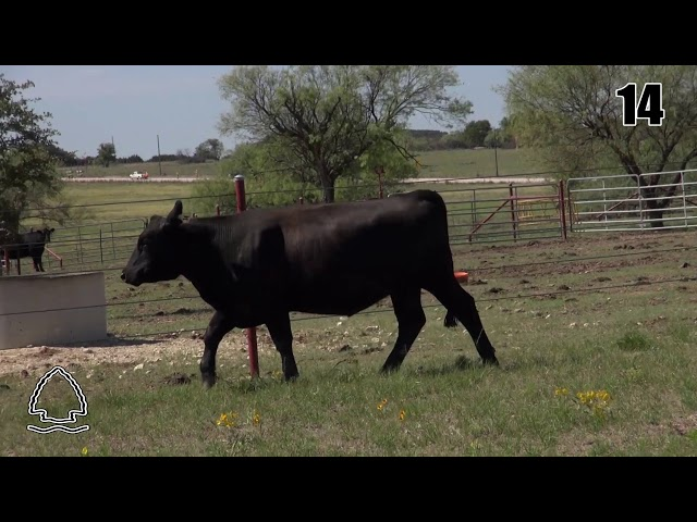 Pearcy Angus Ranch Lot 14
