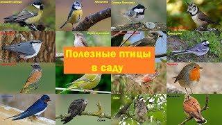 Полезные птицы в вашем саду