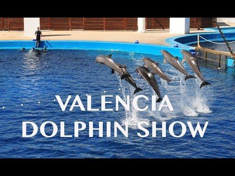 Valencia Aquarium Dolphin Whole Show - L'Oceanografic (Oceanographic Park)
