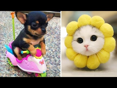 Baby Animals 🔴 Funny Cats and Dogs Videos Compilation (2020) Perros y Gatos Recopilación #30
