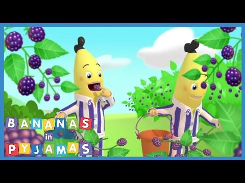 Blackberry picking - Bananas in Pyjamas Official