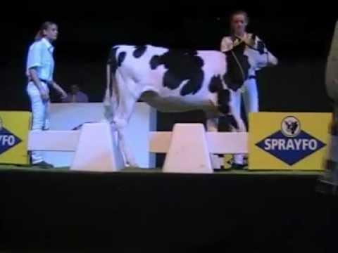 Holstein Master Sale Nr. 12