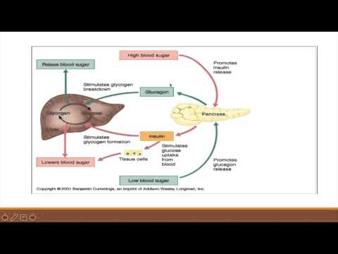 Glucose Metabolism and Regulation