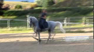 Элементы выездки лошади