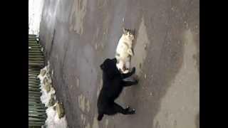 Друзья на веки кот и собака !!!
