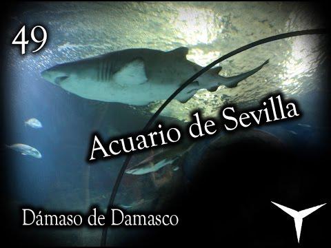 Una visita al Acuario de Sevilla // V-Blog: 49