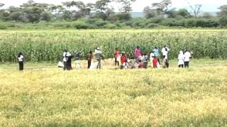 Baringo rice farming