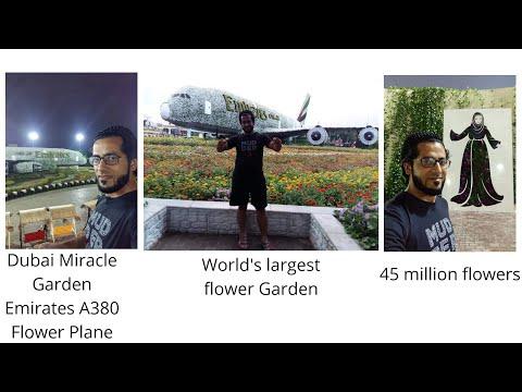 Dubai Miracle Garden | Emirates Airbus A380 | The worlds largest flower Garden