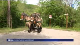 trans ardennaise  attelage France 3 Champagne Ardenne