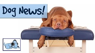 DOG NEWS! With a SURPRISE Appearance from a Special Guest! Dog News...