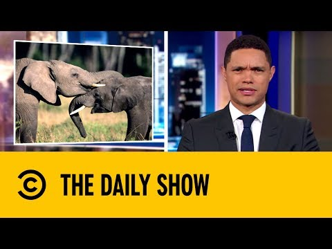 Humans Driving One Million Species Into Mass Extinction   The Daily Show with Trevor Noah