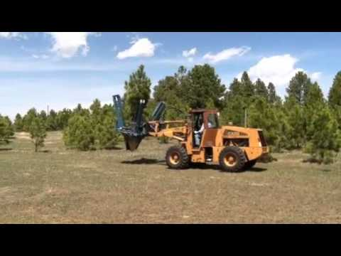 Nursery Colorado Springs Heidrich S Tree Farm Ponderosa Pine