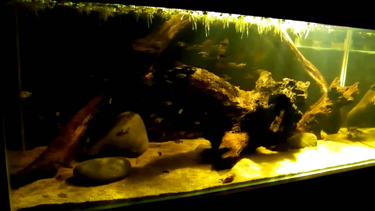 amazon south american blackwater biotope part 2 youtube