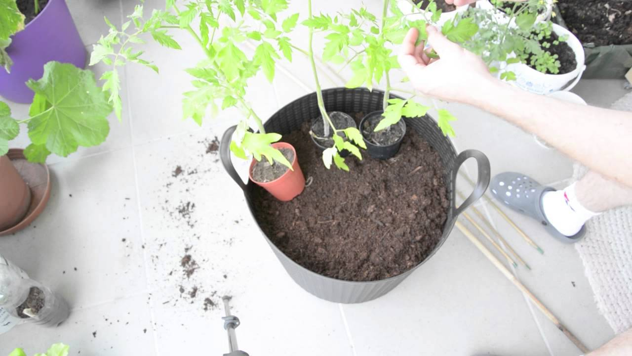 tomaten anbauen im topf teil 2 mein balkon garten tagebuch youtube. Black Bedroom Furniture Sets. Home Design Ideas