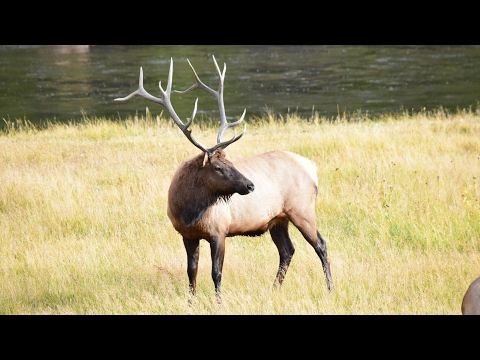Van Life -  Yellowstone National Park