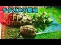 リクガメの駆虫について の動画、YouTube動画。