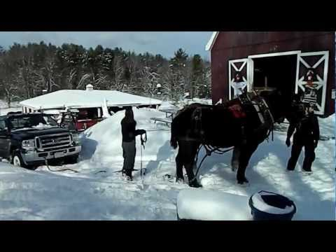 Wendy - REAL Horsepower Pulls Stuck Truck And Trailer Out!