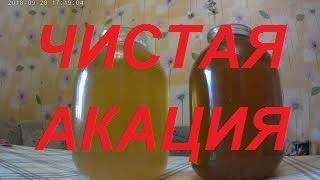 мёд белой акации-Как получить чистый мёд Белой Акации? Почему темнеет, садится мёд белой акации?