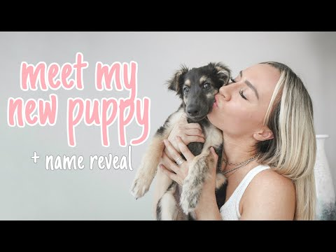 Picking up my new Windsprite PUPPY / 2 week check in | jessica luxe