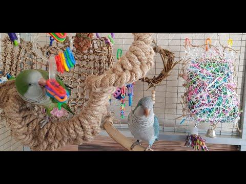 Игрушки для попугаев своими руками для волнистых попугаев