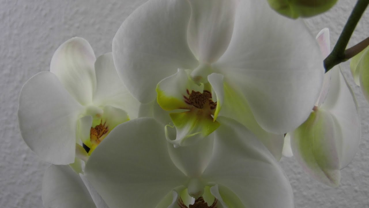 Orchideen Im Glas ❁ Deko Ideen Mit Flora Shop   YouTube