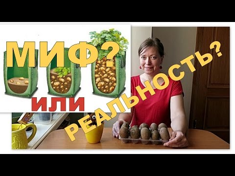 Картошка в мешках - МИФ?! // Выращивание картофеля в мешках 1 / Potatoes in bags 1
